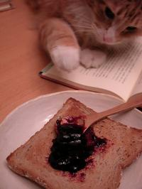 Cat with Jelly Toast