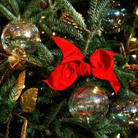 Christmas tree and ribbon