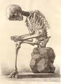 skull sit