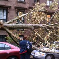 Tree down in Fort Greene on Sept. 16, 2010
