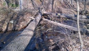 Sandy damaged many trees