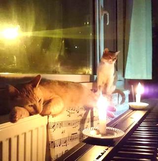 Sarper Duman and his cats bonding over his keyboard.