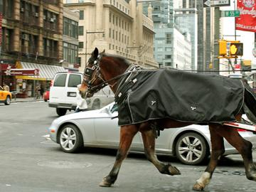 A carriage horse clops through traffic down 55th Street in Manhattan, back toward the West Side Stables.