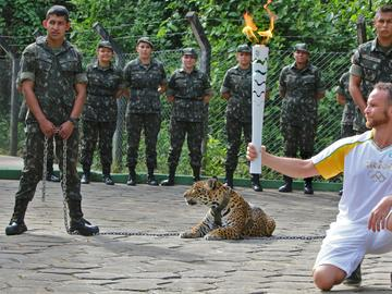 At an Olympics torch-lighting ceremony in Brazil, the jaguar (the national animal) had to be shot dead by soldiers when he escaped and escaped a veterinarian.