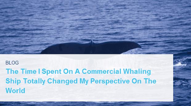 em ClickHole /em  blogged  em Moby Dick /em  this week