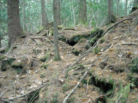 Aokigahara, also known as the Sea of Trees, lies at the base of Mount Fuji in Japan. It is one of the most common sites in the world for suicides, second only to San Francisco's Golden Gate Bridge.