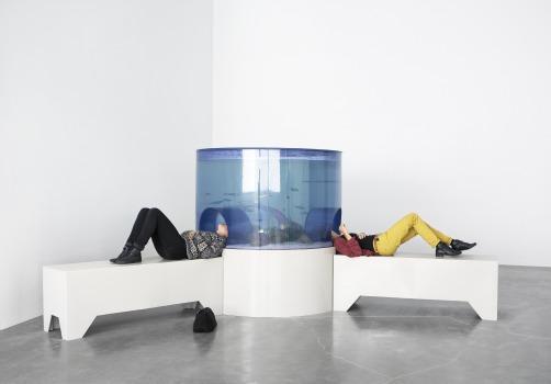 Aquarium, Carsten Höller, New Museum