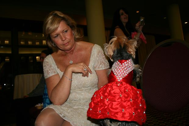 Darsey mitchell had this 5 000 dress made for her yorkshire terrier