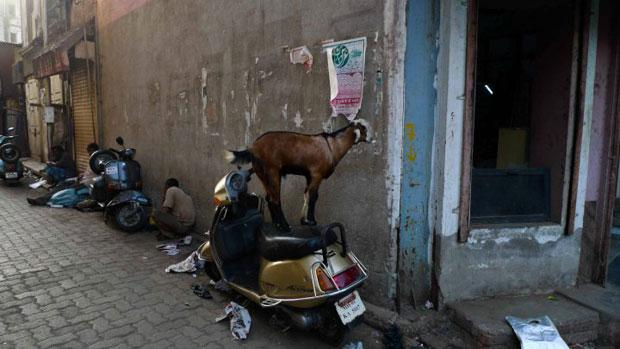 Snapshot of a goat standing on a motorbike in Mumbai