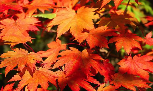 red and orange leaves in autumn.