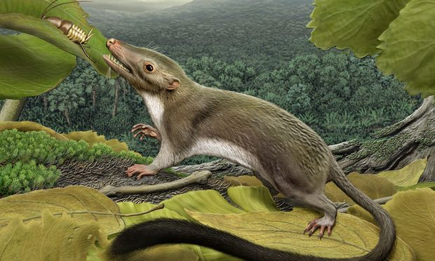 An artistic rendition of a small brown rat/shrew animal with pointy snout and long furry tail reaching a dragonfly-like insect in an ancient jungle world.