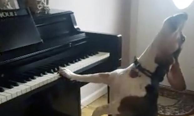 Buddy shows off his musical talents before adoring humans.