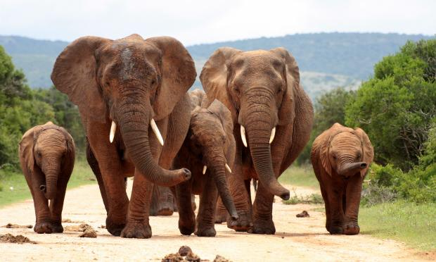 New regulations aimed at protecting Africa's endangered elephants are sending shock waves through parts of the music world.