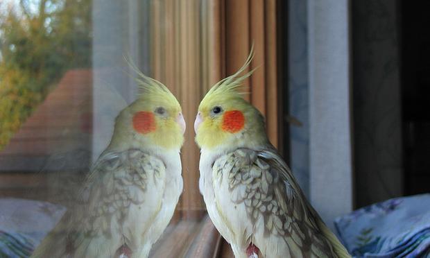 bird reflecti
