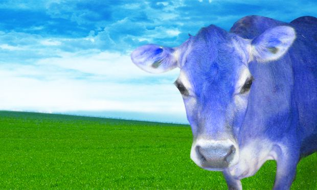 How now, blue cow?