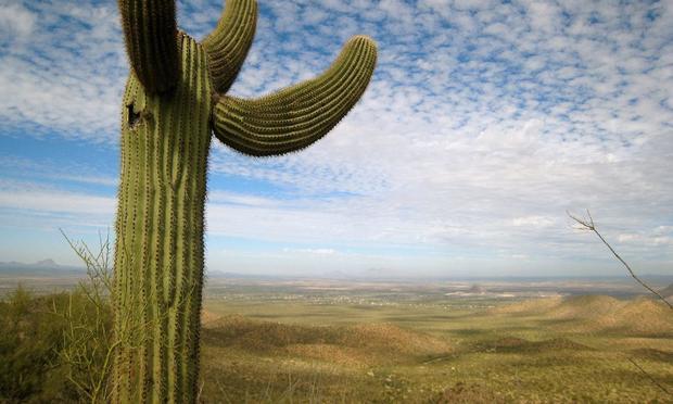 Cactus, Desert, Saguaro