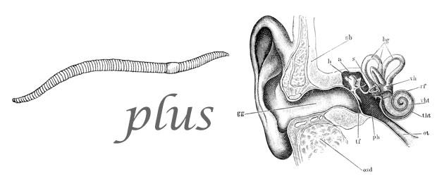 Worm plus ear