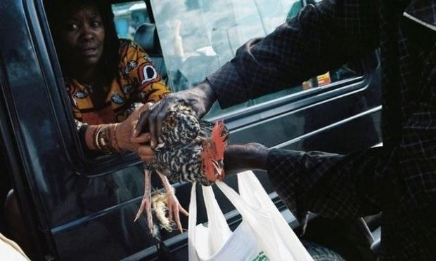 chicken being handed out of a car