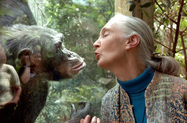 The Weekender: Dr. Jane Goodall on Her Lifelong Work and New Film ...