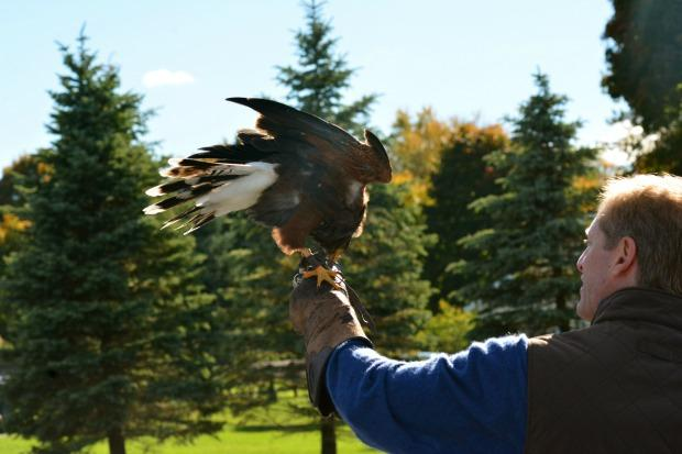 Producer Sarah Montague followed John Schwartz and Choco, a Harris' Hawk