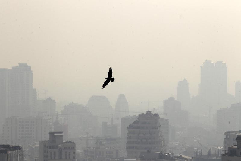 A bird flying in front of buildings in the Iranian capital Tehran.