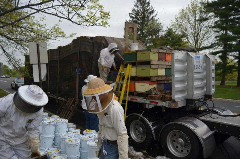 Reloading a truck full of spilled bees