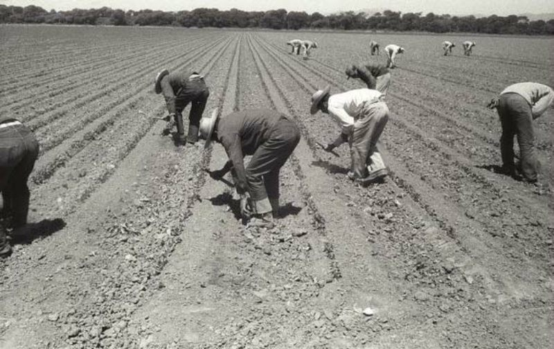 To use the short-handled hoe, field workers had to bend over and stay stooped in order to move on to the next plant.