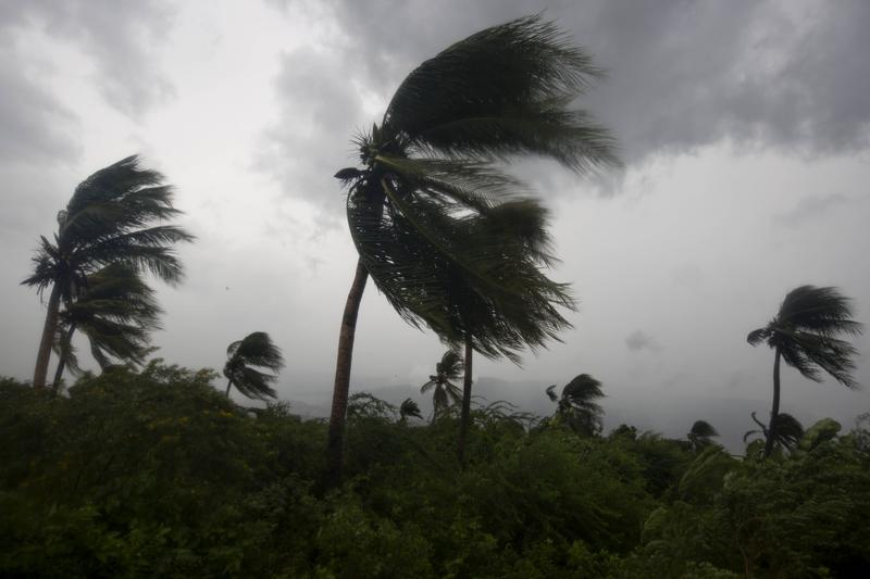 Wind blows coconut trees during the passage of Hurricane Matthew in Port-au-Prince, Haiti, Tuesday, Oct. 4, 2016.