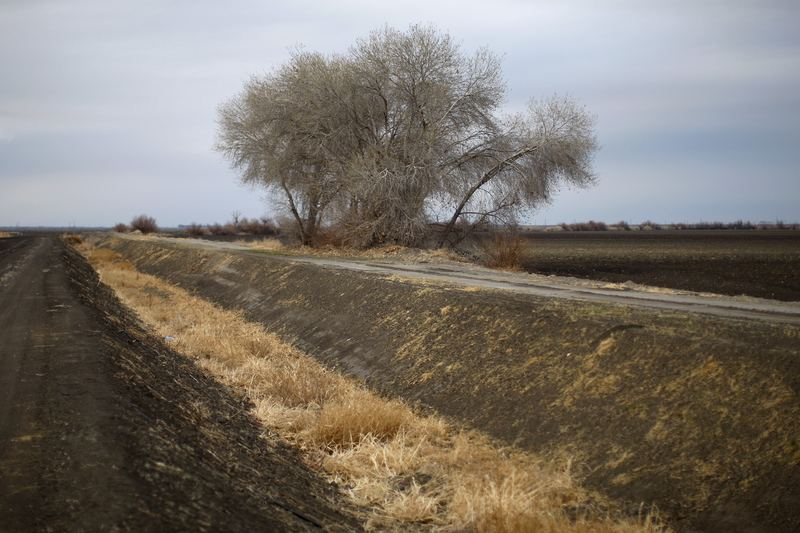 A dry canal is filled with weeds on February 6, 2014 near Bakersfield, California. California is in its third straight year of unprecedented drought.