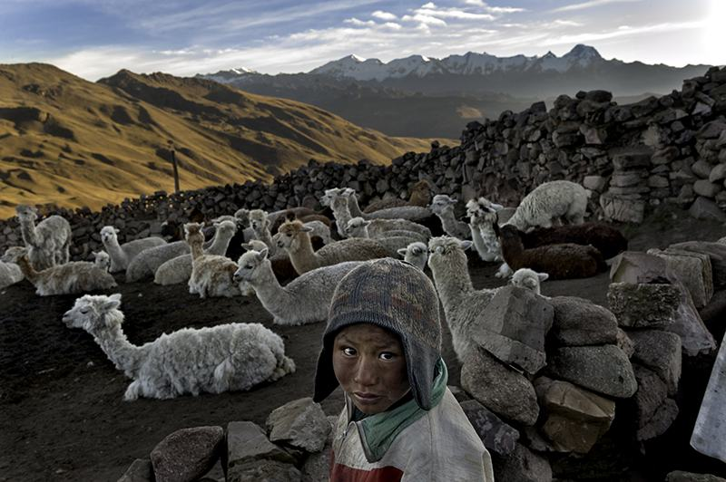 Bolivia - Alvaro Kalancha Quispe, 9, opens the gate to the stone pen that holds the family's alpacas and llamas each morning so they can graze throughout the hillsides during the day.
