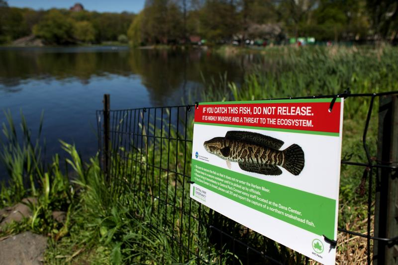 Snakehead warning sign at Meer Lake in Central Park.