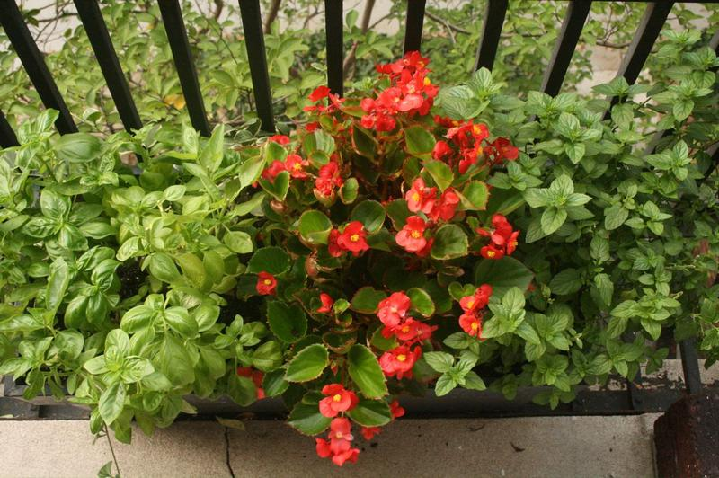 Gerard Lordahl shares advice on how to grow a garden on a balcony or a windowsill.