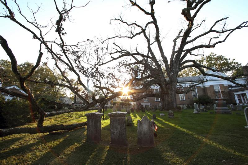 A sprawling white oak tree estimated to be 600 years old spreads over and through the nearly 300 year-old cemetery of the Basking Ridge Presbyterian Church on Monday, Oct. 17, 2016, in New Jersey.