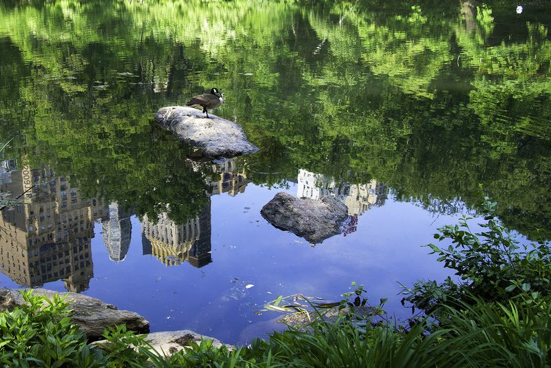 A reflection in the pond in Central Park