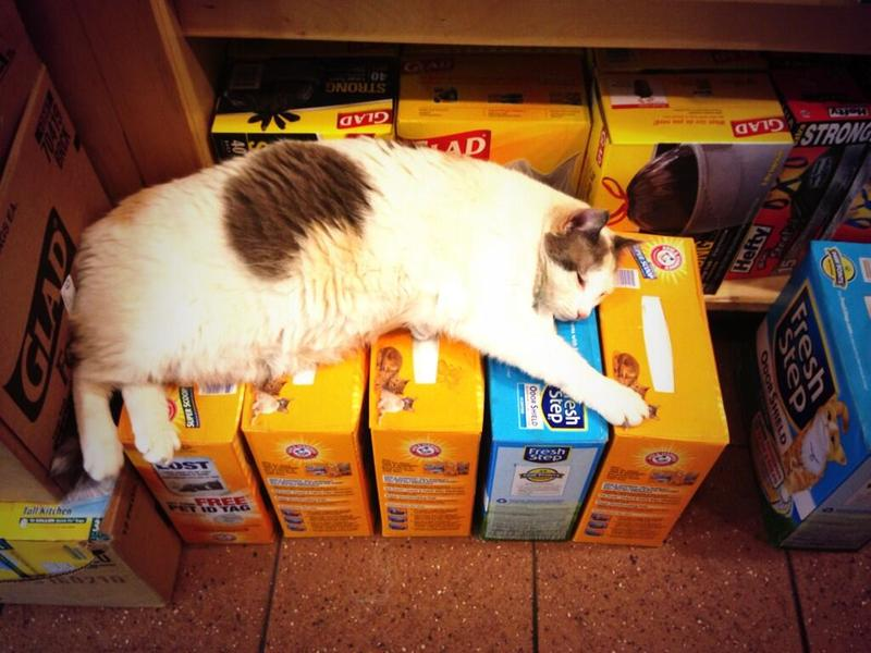 Cindy the cat lounges on litter at her bodega in the Village.