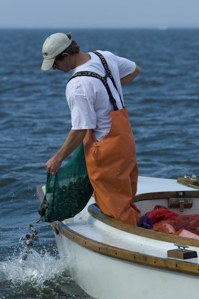 Depositing clams in Long Island's Great South Bay