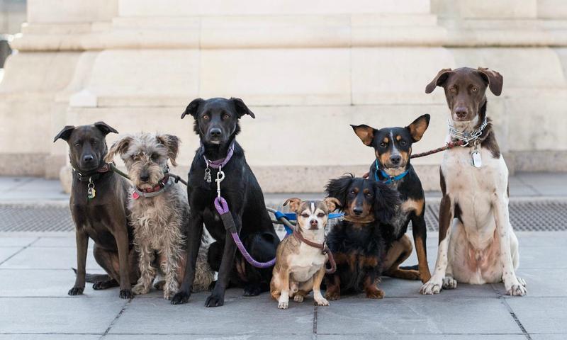 Lolita, Vida, Winnie, Rudy, Norman, Bailey, & Chance, Washington Square Park, New York, NY