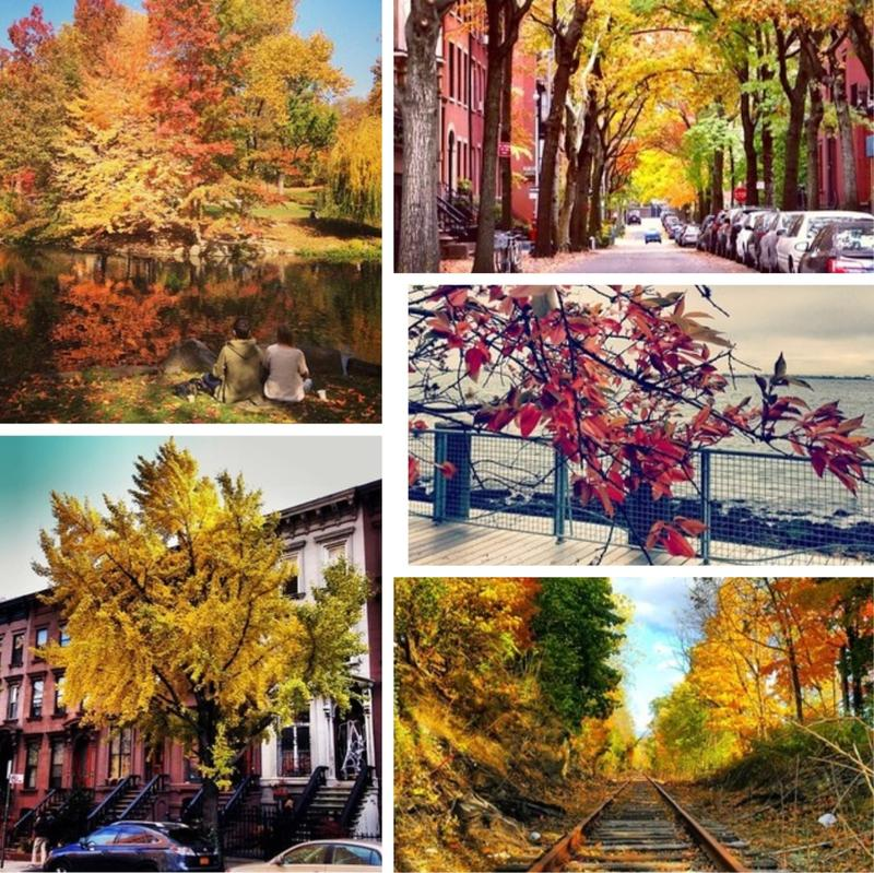 Some of our favorite #WNYCfallfoliage submissions.