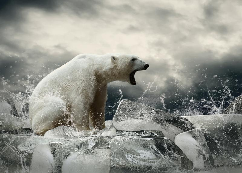 Polar bears, victims of climate change caused in part of emissions from the burning of fossil fuels.