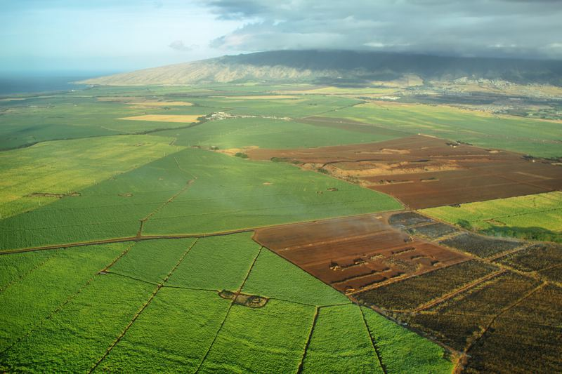 Sugarcane fields in Hawaii
