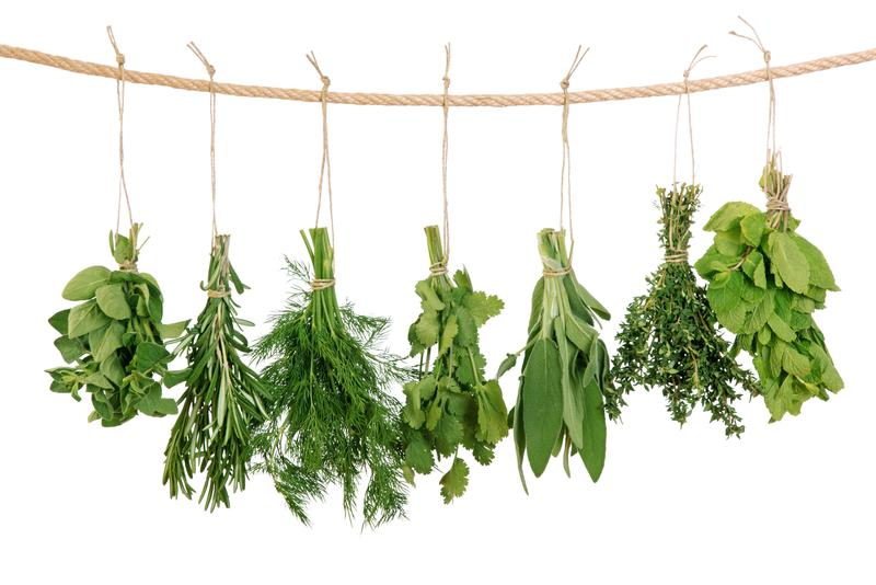 Herbs can be used in cooking, medicine, and more.