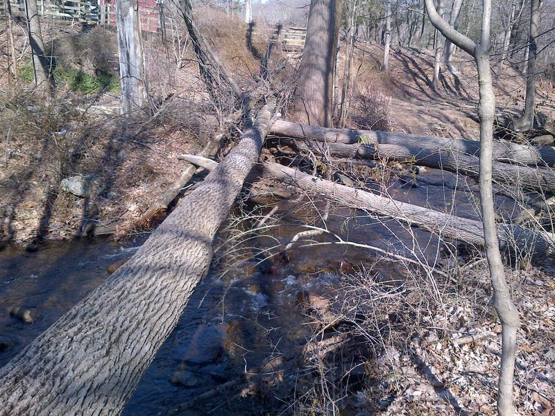 Massive downed trees criss cross the Dismal Brook in Morris County