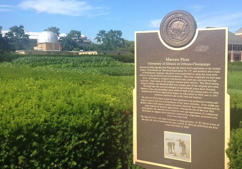 The Morrow Plots are the oldest experimental corn field in the Western Hemisphere. (Jeremy Hobson/Here & Now)
