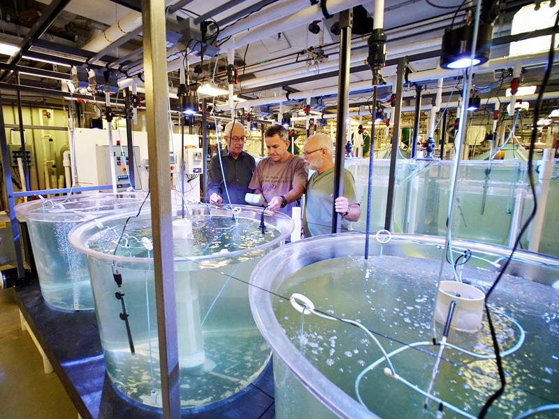 Yonathan Zohar, Jorge Gomezjurado and Odi Zmora check on bluefin tuna larvae in tanks at the University of Maryland Baltimore County's Institute of Marine and Environmental Technology.