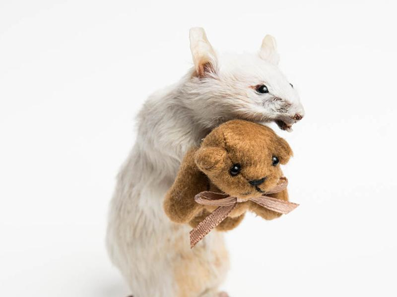 """I think actually handling something dead is an important part of coming to terms that all of us have in common,"" says taxidermist <strong></strong>Margot Magpie, who created the piece above."