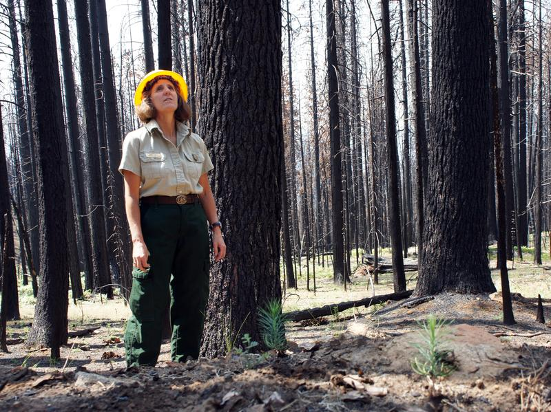 Maria Benech of the U.S. Forest Service surveys a severely burned patch of forest. Almost 40 percent of the burned area looks similar.