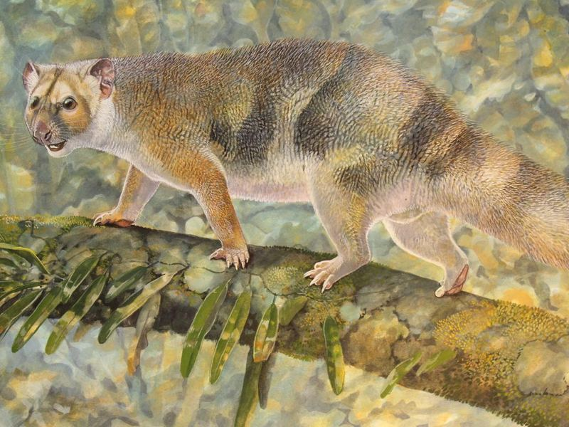 Paleoartist Peter Schouten's reconstruction of <em>Microleo attenboroughi</em> prowling along the branches of rain forest trees in search of prey.