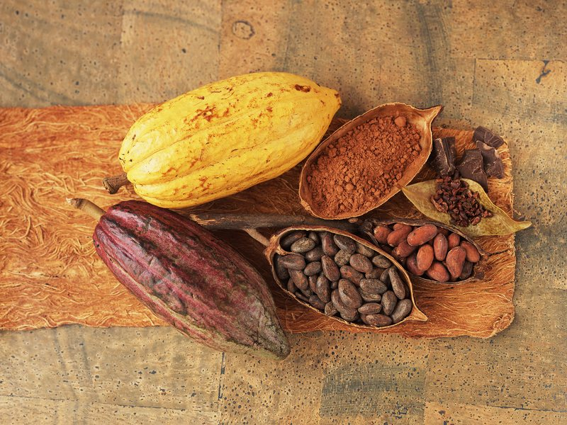 Researchers are recruiting volunteers to participate in a four-year study trial of cocoa extract. Half of the participants will take capsules containing about as much cocoa extract as you'd get from eating about 1,000 calories of dark chocolate.