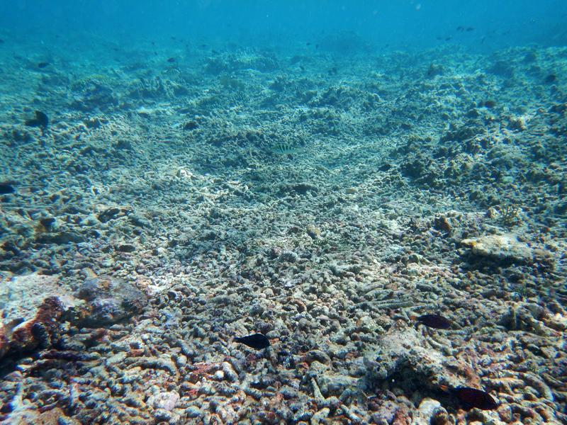 """Coral rubble remains after """"chopper"""" boats killed branching corals, which were subsequently further broken up by storm waves of blast fishing."""
