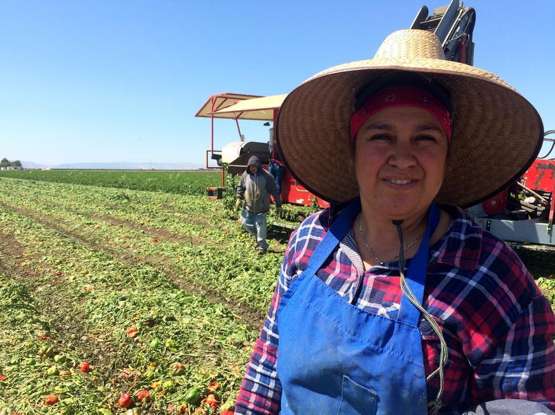 Farmworker Maria Diaz works in the pepper fields of Dixon, Calif.